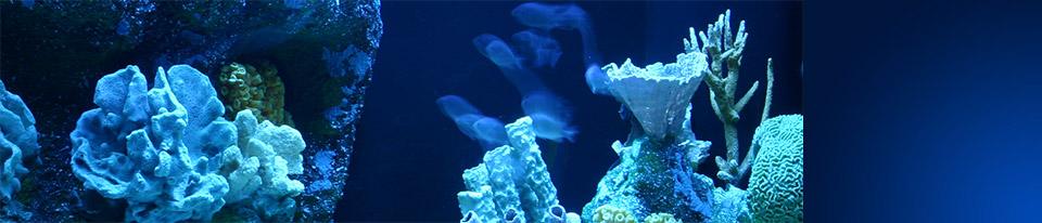 Aquarium Concepts